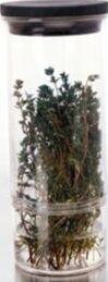herb keeper 1