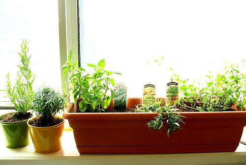 Grow Your Own Kitchen Herb Garden Kitchen Clan